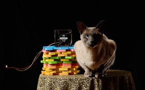 Picture cat, black background, cooler, composition, colored plastic