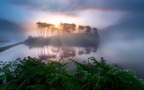 Wallpaper island, night, lake, ferns