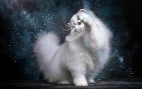 Picture cat, white, pose, kitty, Persian, photoart
