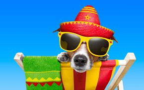 Picture the sky, face, blue, background, stay, photoshop, towel, humor, hat, paws, glasses, chaise, Jack Russell …