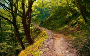 Wallpaper Trees, Forest, Trail, Forest, Trees, Path