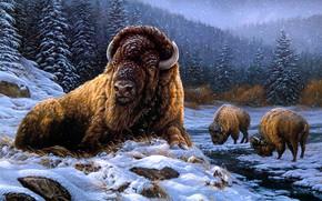 Picture winter, snow, Buffalo, Buffalo, Rosemary Millette