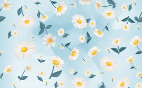 Picture flowers, background, blue, chamomile, Colorful