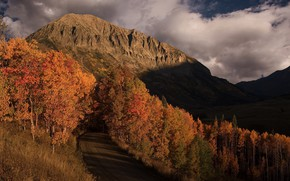 Picture forest, mountains, the evening