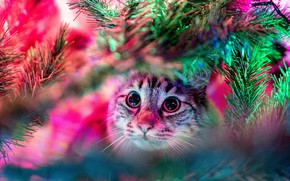 Picture cat, cat, look, face, light, branches, Christmas, New year, tree, needles, garland, bokeh