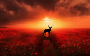 Picture HORIZON, The SKY, The SUN, FIELD, CLOUDS, TRAIL, FLOWERS, HORNS, DAL, MAKI, SILHOUETTE, DEER, фотограф …