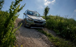 Picture vegetation, the descent, Subaru, crossover, Forester, 2019