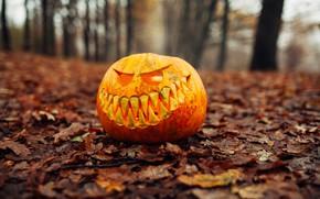 Picture autumn, leaves, pumpkin, Halloween, halloween, autumn, leaves, pumpkin