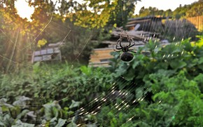 Picture greens, the sun, landscape, sunset, nature, beauty, spider
