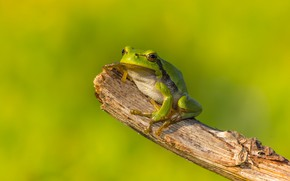 Picture macro, green, background, frog, green, bitches