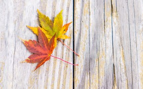 Picture autumn, leaves, background, tree, Board, wood, background, autumn, leaves, autumn, maple