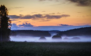 Picture field, forest, the sky, grass, clouds, fog, tree, morning, meadow, twilight, early