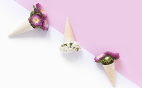 Picture white, flowers, background, pink, decor, waffle cone