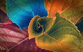 Picture photo, macro, leaves