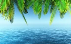 Picture palm trees, paradise, beach, palms, beach, sea, sea, summer, tropical, summer, the sky