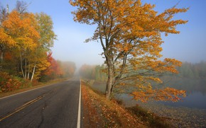 Picture road, autumn, forest, fog, lake, photo