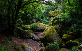 Picture greens, forest, trees, stones, France, moss, the bushes, Huelgoat Forest