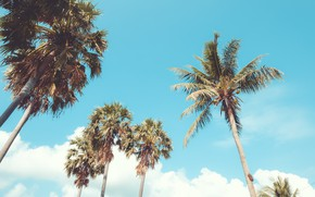 Picture beach, summer, the sky, palm trees, shore, summer, beach, seascape, beautiful, paradise, palms, tropical