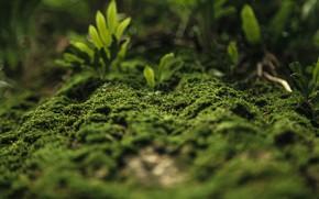 Picture Freshness, Close-Up, Green, Myicahel Tamburini, Flora, Plants, Moss green, Moss, by Myicahel Tamburini, Nature, Garden, …