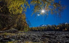 Picture autumn, the sun, trees, stones