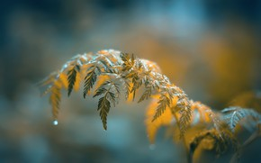 Picture leaves, branch, water drops, bokeh