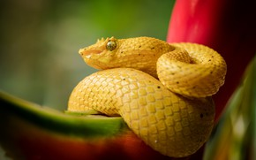 Picture nature, snake, yellow