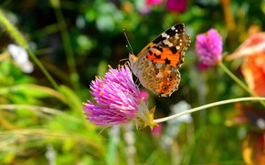 Picture flower, summer, macro, nature, green, background, pink, butterfly, insect, bright, bright colors, bokeh