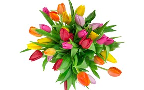 Picture bouquet, tulips, white background