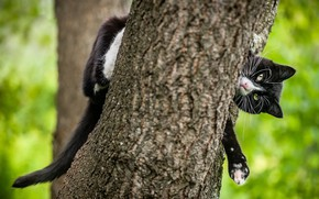 Picture cat, cat, look, face, nature, pose, tree, black, paws, tail, trunk, bark, green background, bokeh, ...