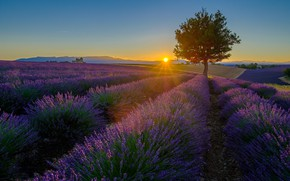 Picture summer, the sky, the sun, rays, light, sunset, flowers, tree, hills, the evening, the ranks, …