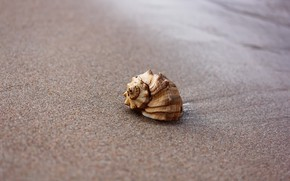 Picture sand, beach, background, shell