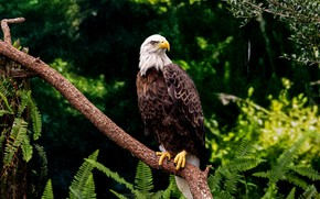Picture leaves, branches, thickets, bird, fern, predatory, bokeh, bald eagle