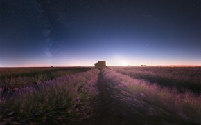 Picture flowers, night, the wind, blur, house, the ranks, lavender, starry sky, plantation, bushes, lavender field
