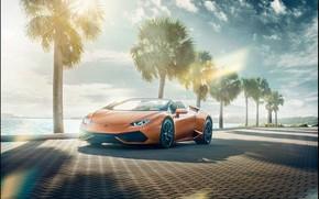 Picture palm trees, transport, shadows, car, Lamborghini Huracán Spyder