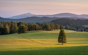 Picture field, forest, summer, grass, trees, mountains, fog, tree, hills, tops, spruce, dal, morning, village, meadow, …