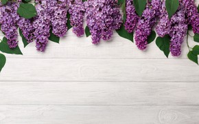 Picture flowers, wood, flowers, lilac, romantic, lilac