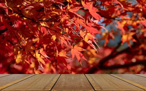 Picture autumn, leaves, background, tree, Board, colorful, red, red, maple, wood, background, autumn, leaves, autumn, table, …