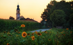 Picture road, greens, summer, trees, sunflowers, flowers, yellow, Germany, Church