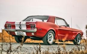 Picture Mustang, Ford, Ford Mustang, 1967, Ford Mustang, Muscle Car