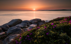 Picture sea, summer, the sky, the sun, light, sunset, flowers, stones, dawn, shore, beauty, pink, Spain, …