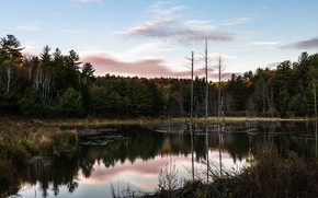 Picture forest, nature, lake