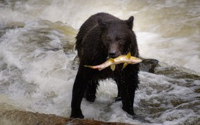 Picture fish, bear, pond