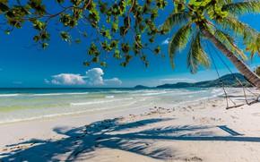 Picture beach, shadows, palm tree