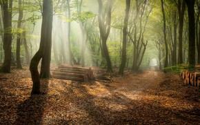 Picture forest, morning, wood