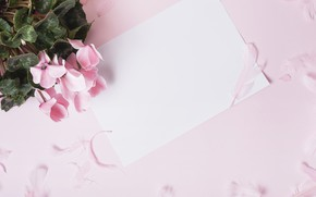 Picture flowers, background, pink, petals