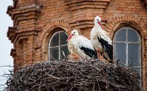 Picture birds, house, socket, storks