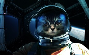 Picture Look, Cat, Space, Cat, Astronaut, Eyes, Face, Astronaut, Art, Art, Fiction, Cat, Eyes, Glance, Cosmos, …