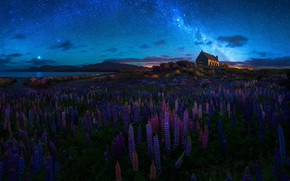 Wallpaper field, the sky, stars, clouds, flowers, night, house, darkness, blue, the moon, shore, hill, meadow, ...