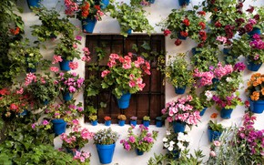 Picture leaves, flowers, grille, Wall, window, pots