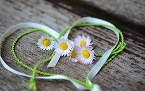 Picture flowers, heart, Valentine's Day, Daisy
